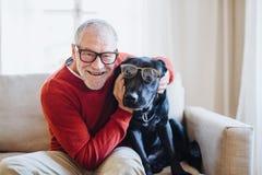 Un hombre mayor que se sienta en un sofá dentro con un perro casero en casa, divirtiéndose foto de archivo