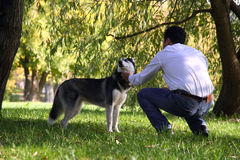 Un hombre que acaricia un perro fornido Foto de archivo
