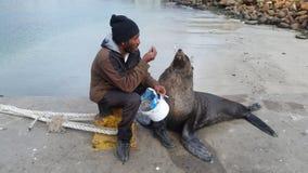 Un hombre que alimenta a su sello del animal doméstico pescados frescos fotografía de archivo libre de regalías