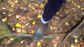 Un hombre que camina a lo largo de un rastro natural ecológico a través del bosque septentrional del otoño en un parque de natura almacen de video
