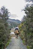 Un hombre que camina a lo largo del rastro a los lagos y a la opinión azules del glaciar de Tasman, Aoraki/cocinero National Park Imagen de archivo libre de regalías