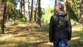 Un hombre que camina a través de un bosque del pino de la primavera almacen de metraje de vídeo