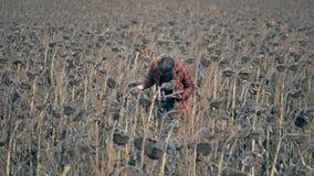 Un hombre que comprueba el campo con las cosechas falladas Concepto del calentamiento del planeta almacen de video