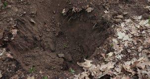 Un hombre que entierra un perro muerto Entierro de animales Prores, c?mara lenta almacen de video