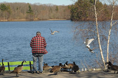 Un hombre que hace una pausa un lago que alimenta algunos pájaros Imagenes de archivo