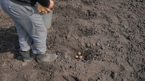 Un hombre que planta las patatas en el ataúd metrajes