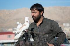Un hombre que sostiene una jaula que mira las palomas que se colocan en ella Imagenes de archivo