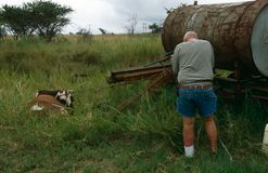 Un hombre que tira una vaca en Suráfrica rural Fotografía de archivo