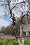Un hombre se sienta en un árbol y aserrar la rama Foto de archivo