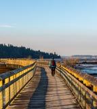 Un hombre solitario que camina un paseo largo en un lugar popular en Olympia Washington fotografía de archivo libre de regalías