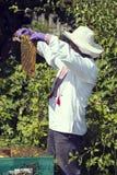 Un hombre trabaja en una recogida del colmenar Imagenes de archivo