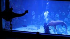 Un hombre y un tiburón, un tiburón es amistosos con un buceador almacen de metraje de vídeo