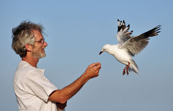 Un hombre y una gaviota que comen fuera de su mano. Imagen de archivo