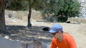 Un homme alimente la chèvre dans la cannelure olive banque de vidéos