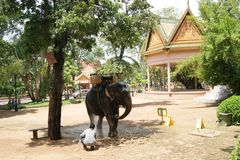 Un homme avec un éléphant chez Wat Phnom, Phnom Penh, Cambodge Photo stock