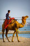 Un homme avec le cavalier de attente de chameau au ghaat d'assi image libre de droits
