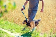 Un homme avec un chien court par le champ d'avoine Photographie stock