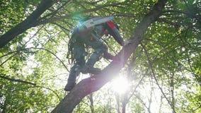 Un homme avec une scie grimpe à un arbre pour commencer à scier une branche banque de vidéos
