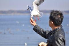 Un homme ayant l'oiseau alimentant d'amusement à une plage Photos stock