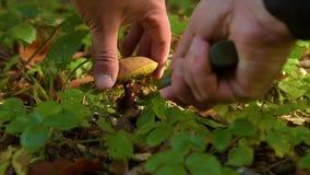 Un homme coupe avec un couteau les champignons clips vidéos