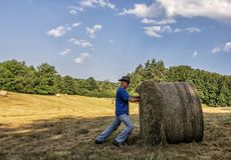 Un homme dans un chapeau couvert de paille regarde dans le domaine Travail agricole Moisson du blé photographie stock