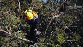 Un homme dans des combinaisons sciant outre des branches près d'un arbre se trouvant au sol clips vidéos
