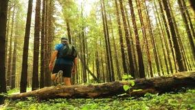 Un homme de touriste fait un pas au-dessus d'un arbre tombé dans un tir de forêt du dos clips vidéos