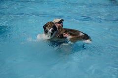 Un homme et son chien dans la piscine Images libres de droits