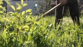 Un homme fauchent avec l'herbe fraîche de faux un matin de pré au printemps banque de vidéos