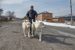 Un homme mène les chiens sur une laisse en bas de la rue photographie stock libre de droits