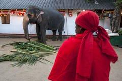 Un homme maintient un oeil sur un éléphant cérémonieux dans le temple de Kataragama à Kandy dans Sri Lanka image libre de droits