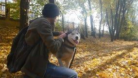 Un homme marchant avec un chien de traîneau dans la forêt banque de vidéos