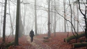 Un homme marchant dans une forêt brumeuse banque de vidéos