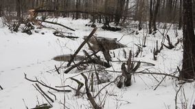 Un homme marchant sur une voie de forêt dans la neige clips vidéos