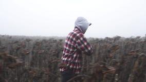 Un homme marche par les tournesols banque de vidéos