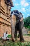 Un homme non identifié s'assied à côté d'un éléphant photographie stock libre de droits