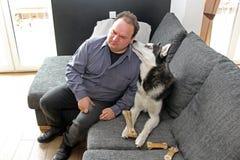 Un homme a plié son oreille à Husky& x27 ; visage de s sur le sofa photos libres de droits