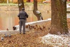 Un homme plus âgé alimente des canards sur le rivage d'un étang en automne La Russie, Ramenskoye, octobre 2017 Image stock