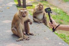 Un homme prend une photo d'un singe sur un appareil-photo d'action image stock
