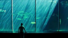 Un homme regardant un aquarium clips vidéos
