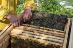 Un homme retire du cadre de ruche avec du miel et des abeilles photos stock