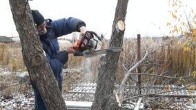 Un homme scie un arbre Arbre de sawing d'homme de travailleur clips vidéos