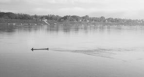 Un homme sur un bateau dans le Mekong dans la province de Loei Photo libre de droits