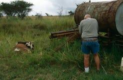 Un homme tirant une vache en Afrique du Sud rurale Photographie stock