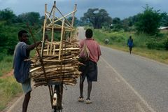 Un homme transportant une pile de bois sur sa bicyclette. Photos libres de droits