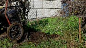 Un homme verse un chariot de jardin avec l'engrais pour fertiliser le sol dans le jardin, secteur de cottage de pays, fumier banque de vidéos