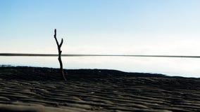 Un horizon nostalgique dans Nudgee, Australie Photographie stock libre de droits