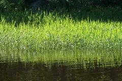 Un horizontal avec l'eau et l'herbe image stock