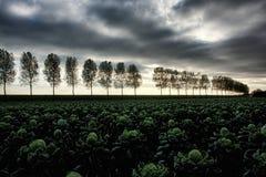 Un horizontal délimité par des arbres hollandais Images libres de droits