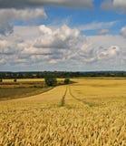 Un horizontal rural anglais Photo libre de droits
